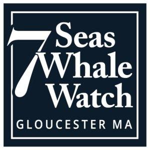 7-seas-whale-watch-loho-460